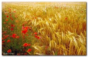 God's Harvest