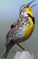 animaltrial.com/larkbird