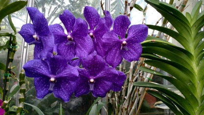 Purple Orchids Biltmore House